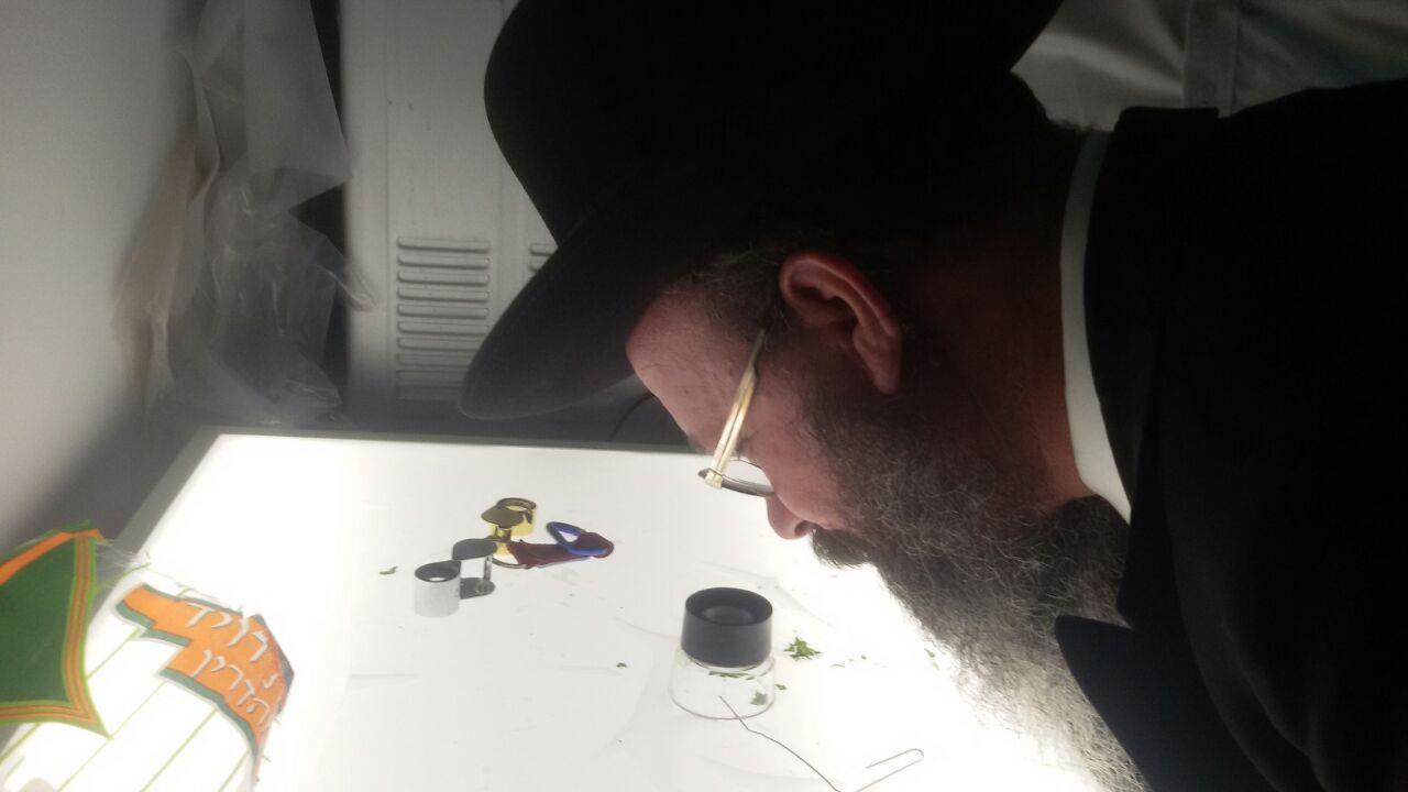 מעבדה לבדיקת חרקים הרבנות פתח תקווה (2)