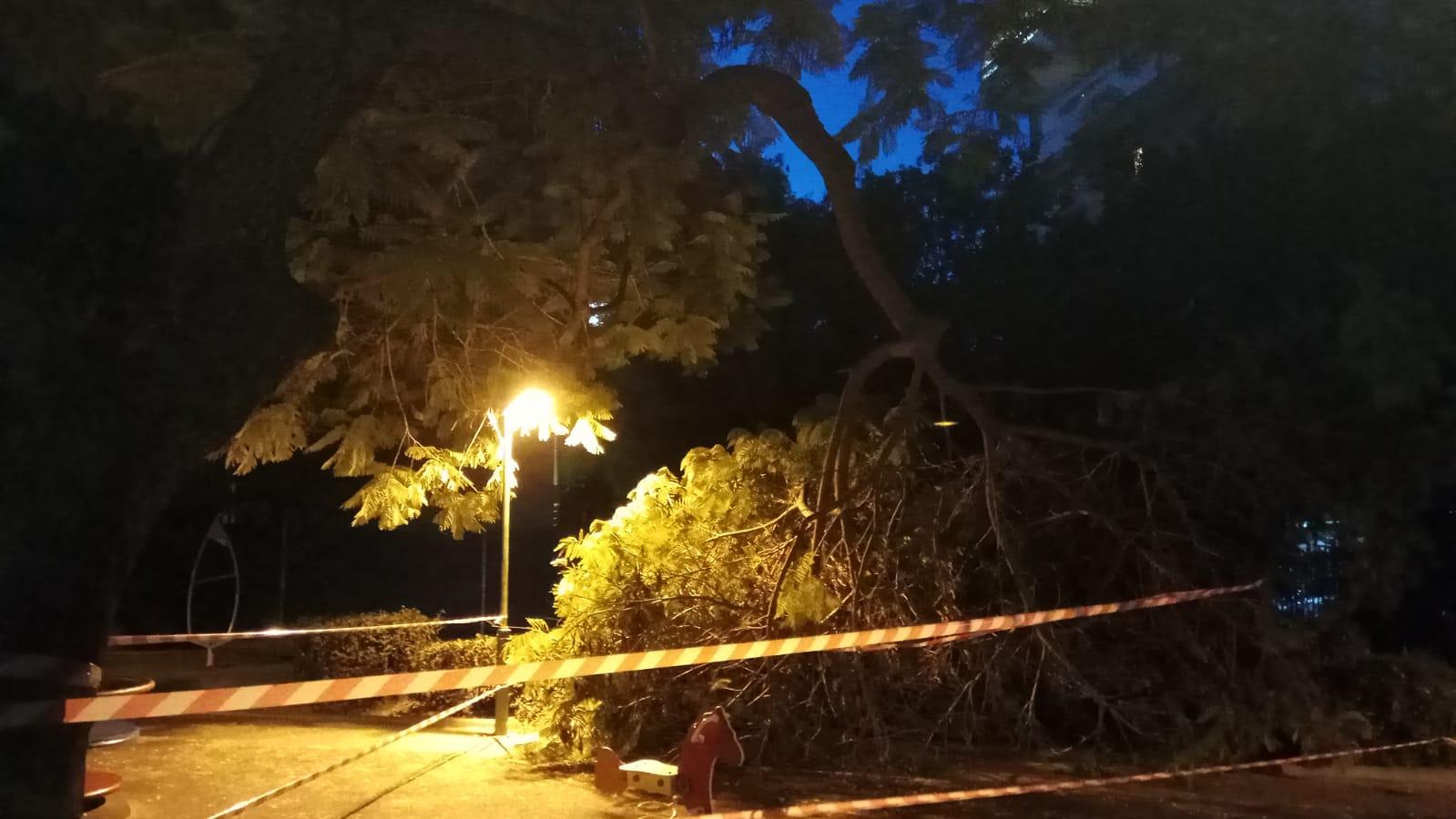 """כמעט אסון: עץ קרס בגן שעשועים הומה בילדים ברחוב שפירא בפ""""ת"""