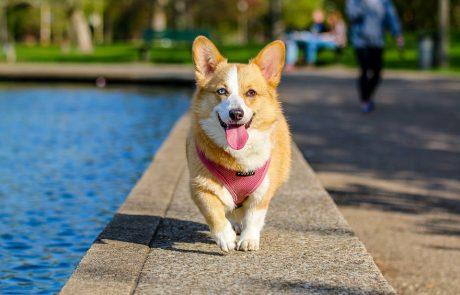 """עיריית פ""""ת מקדמת הקמת פארק כלבים וגינת חתולים ייחודית"""