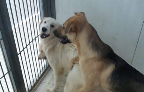 האו האו: עיריית פתח תקווה החרימה שלושה כלבים