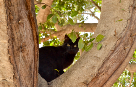 מזעזע: מי מתעלל בחתולים בפתח תקווה?
