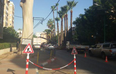 """עבודות גיזום ושימור עץ האקליפטוס הלימוני ברחוב שפירא פ""""ת"""