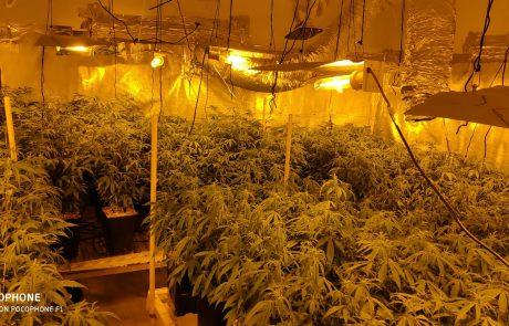 """צעיר בן 26 נעצר בחשד לגידול סמים והחזקת אמצעי לחימה בדירה ששכר בפ""""ת"""