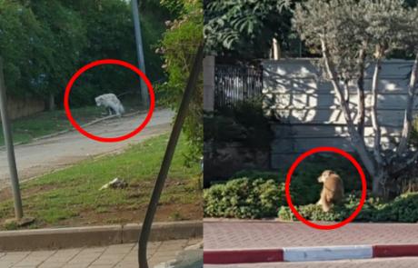 """בדיקת 'פתח תקוואי': כמויות בלתי נסבלות של גללי כלבים ברחובות מרכז העיר פ""""ת"""