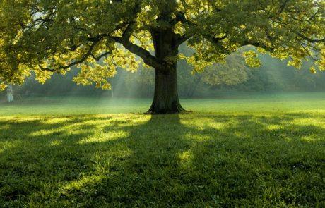 איך צמחייה תורמת למצב הרוח?
